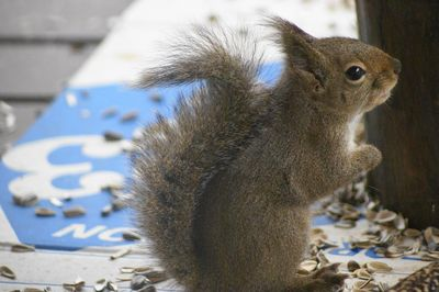 20120224squirrel1.jpg