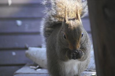 20140221squirrel1.jpg