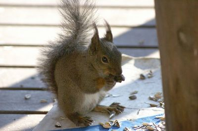 20120522squirrel1.jpg