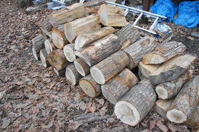 20120425woods2.jpg
