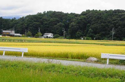 20120925harvest.jpg