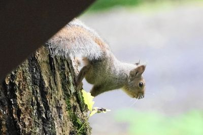 20150627squirrel3.jpg