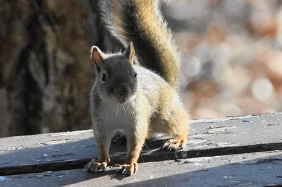20151030squirrel1.JPG