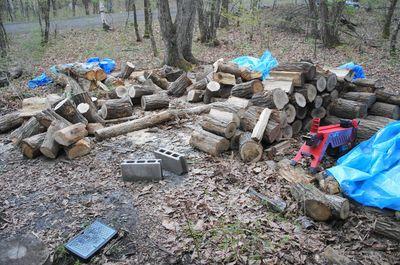 20120519woods.jpg