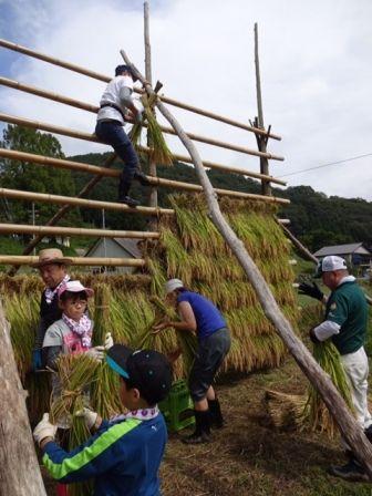 2016稲刈り4