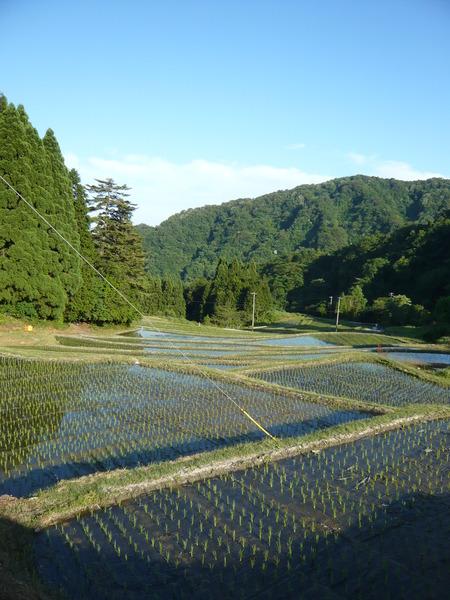 2015田植え体験会17