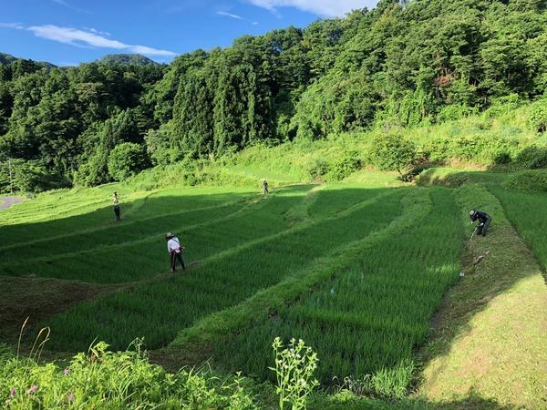 7月草刈り2
