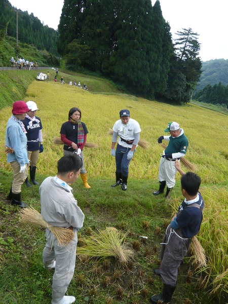2016稲刈り体験会