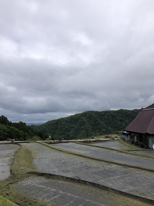ノヲダの田んぼ