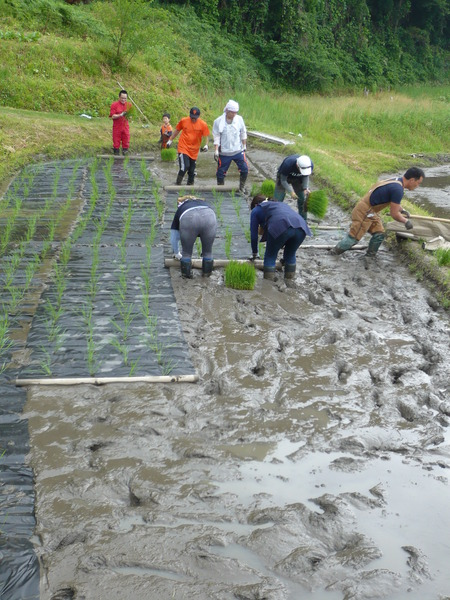 2015田植え体験会7