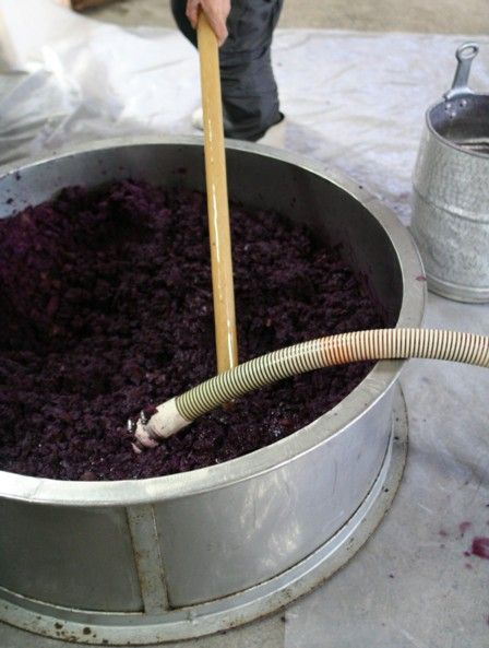 紅芋酒の仕込み9