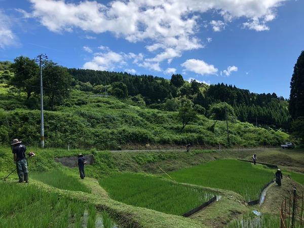 7月草刈り3