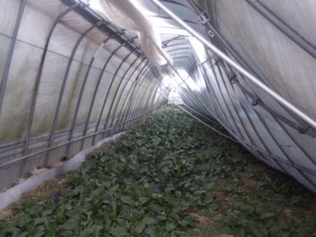 穂のぼの農園2