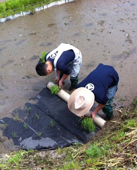 2011田植え体験会3