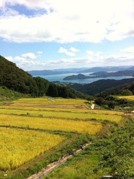 2011稲刈り体験会12