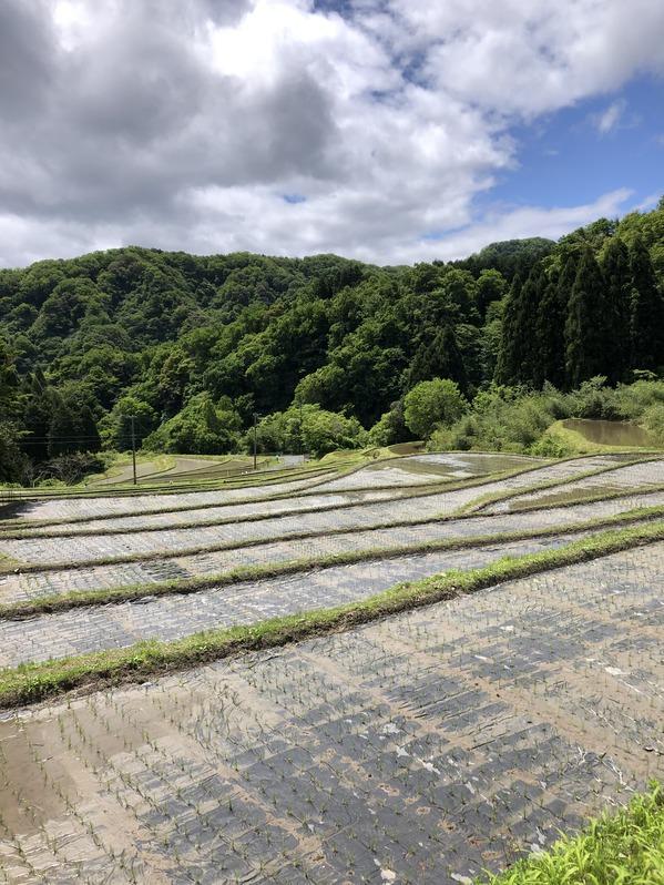世屋姫神社
