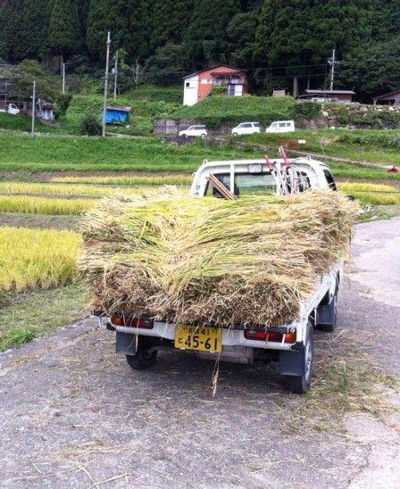 2011稲刈り体験会9