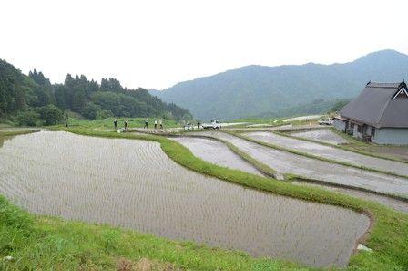 田植え体験会の写真