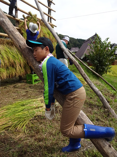 2016稲刈り体験会12