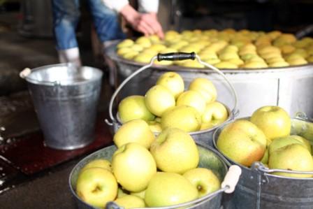 りんごの仕込12