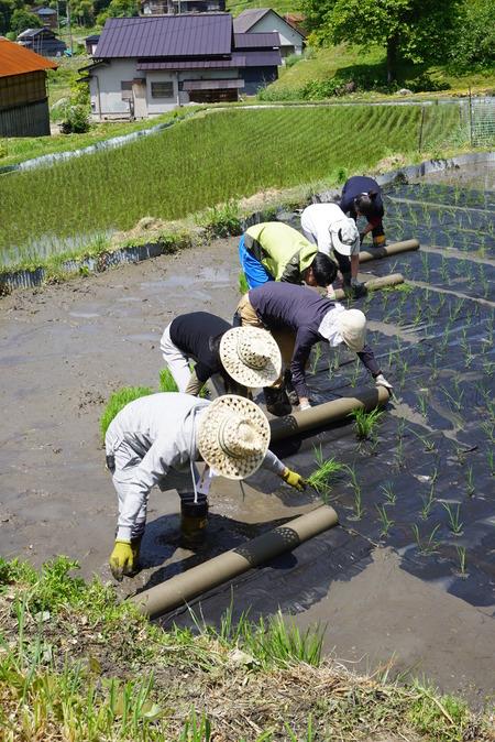 2016田植え体験会6