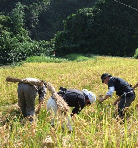 2010稲刈り体験会のご案内