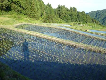 2015田植え体験会18