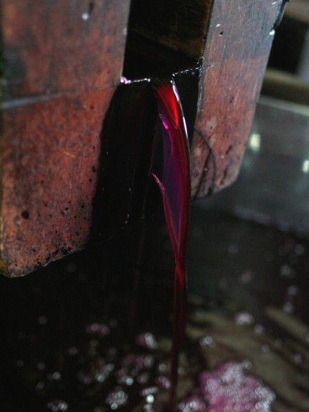 紅芋酒の搾り13