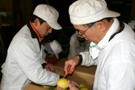りんごの仕込7