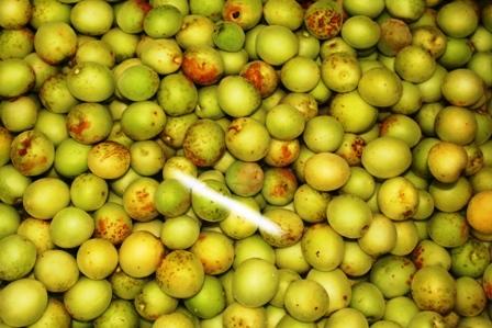 梅酢の仕込み2
