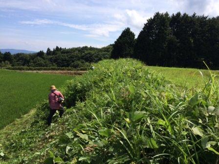 松尾棚田草刈り1