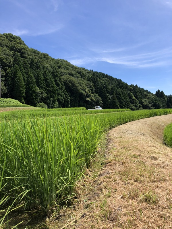 田植え体験会2週目1