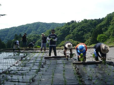 2015田植え体験会2