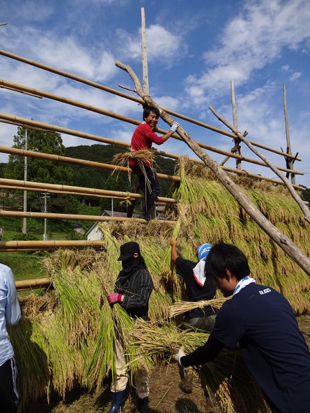 2016稲刈り体験会11