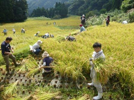 2016稲刈り1