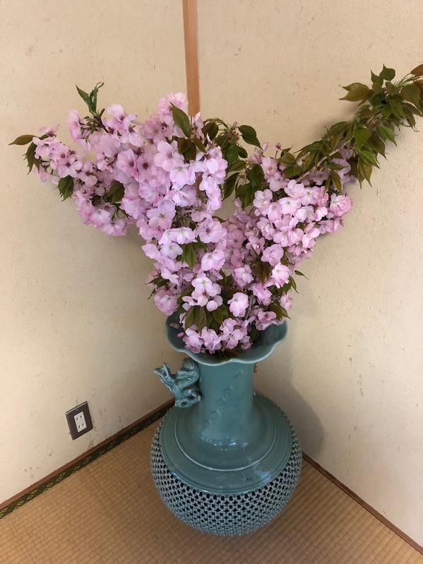 村のお花見1