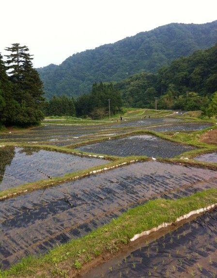 2011田植え体験会5