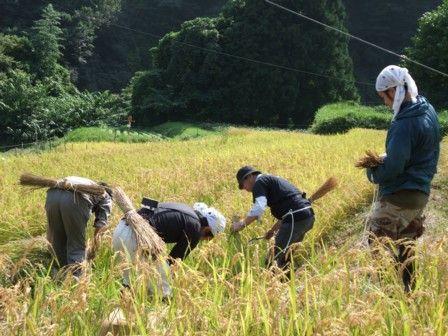 稲刈り体験会2011