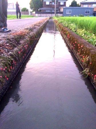 自然農法技術交流会5