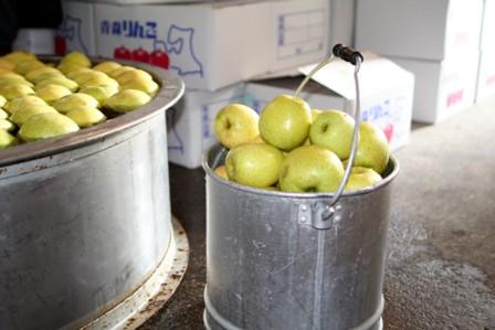 りんごの仕込11