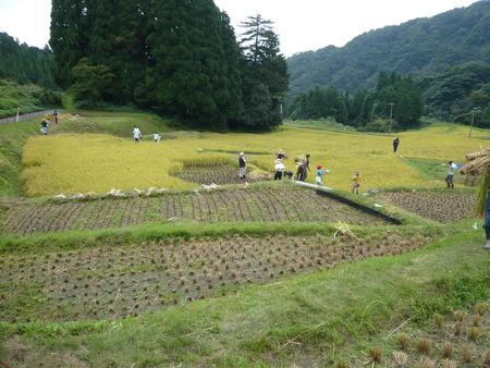 2016稲刈り体験会8