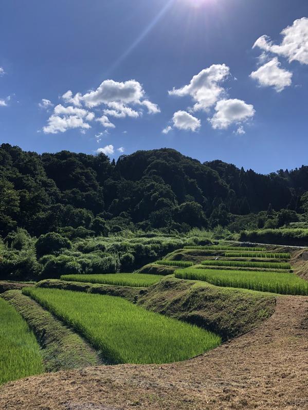 田植え体験会1週目1