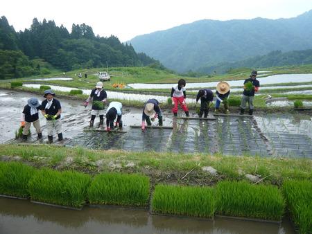 2015田植え体験会6