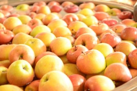 奇跡のりんごの仕込み6