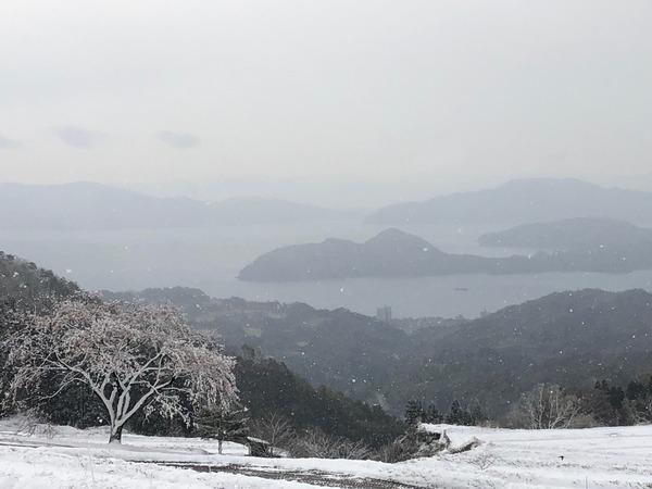 一本桜雪化粧1