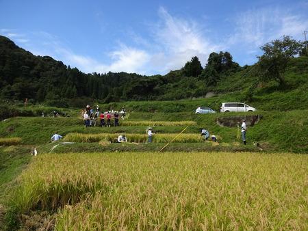 2016稲刈り体験会3