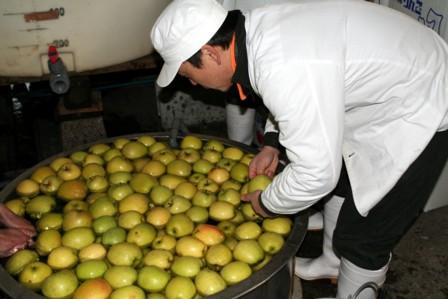 りんごの仕込9