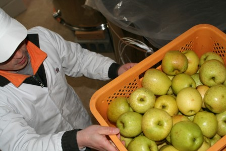 りんごの仕込15