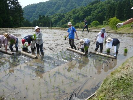 2015田植え体験会4