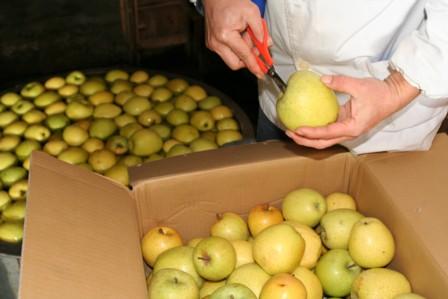 りんごの仕込8